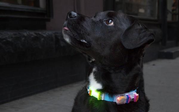 Dogcollar tipstricks img 9305 600x375